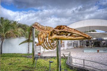 Museum of Cetaceans